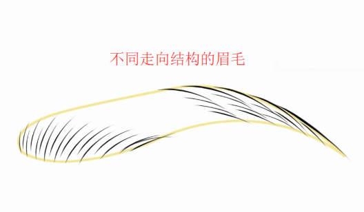 《电脑演示标准眉线条不同排列手法》半永久定妆课程